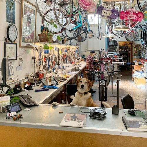 Box Dog Bikes